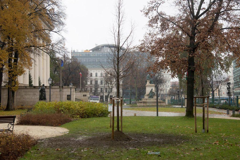 szent istván hárs városi fák