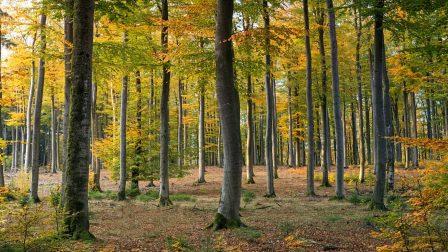 Tovább zöldül Skócia: 18 millió fát ültetnek Glasgow-ban