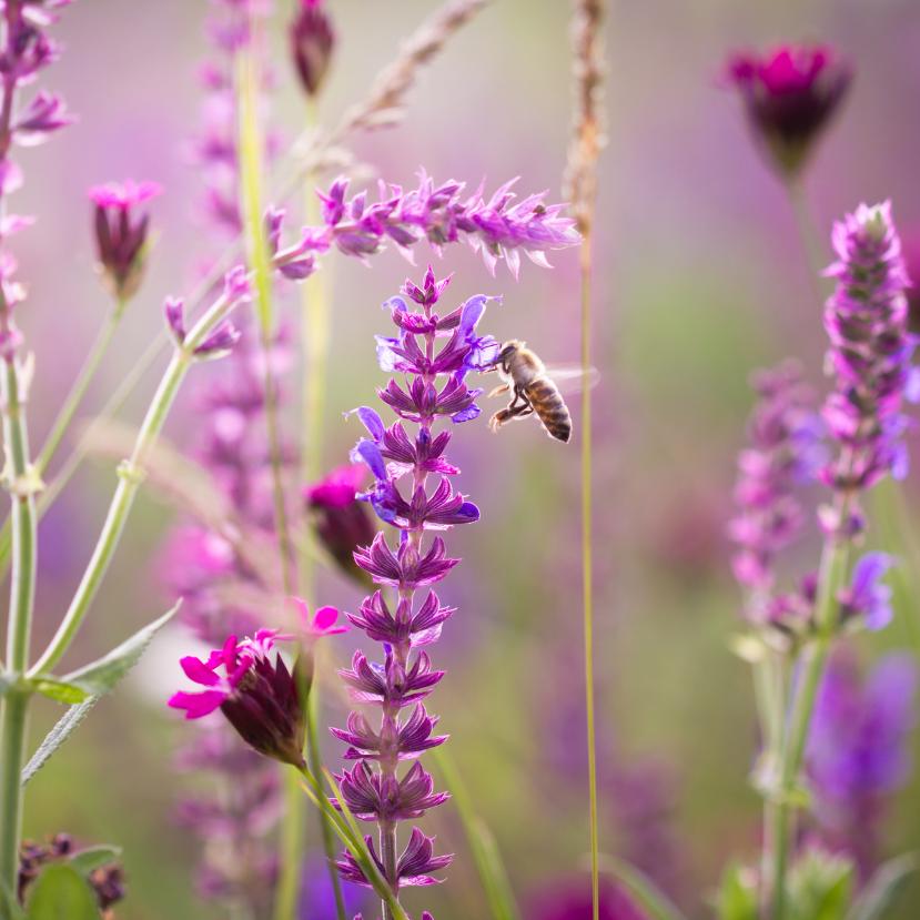 Ismét a beporzókról: mit nevezhetünk méhlegelőnek?