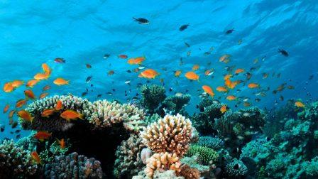 akváriumi zátony