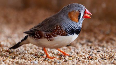 A hőhullámok nem várt hatással vannak a madárfészkekre