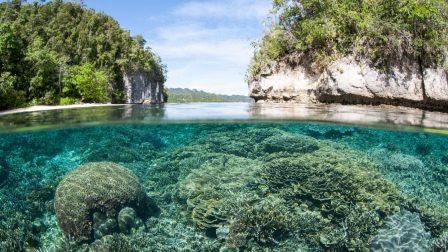 sekély korallzátony(1)