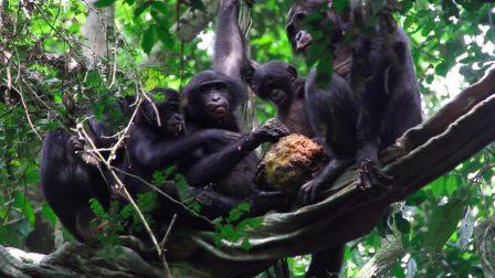 1400×788-bonobok-garai-cintia