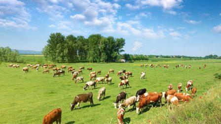 állattenyésztés(1)