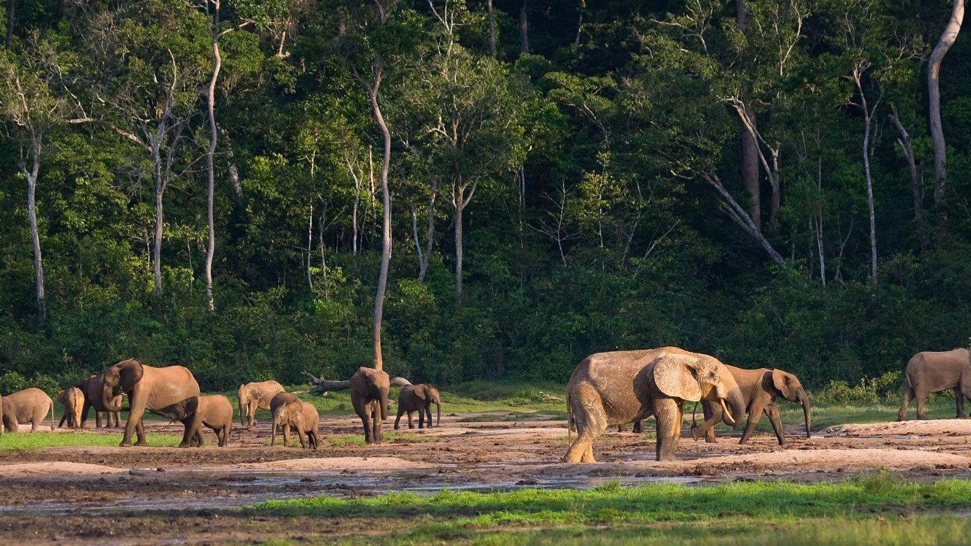 Lekerült a veszélyben lévő világörökségi helyszínek listájáról a Salonga Nemzeti Park