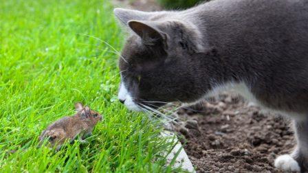Macska egér – rágcsálók
