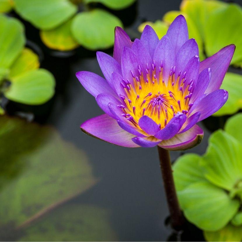Ha van kerti tavad, segítsd a kutatók munkáját!