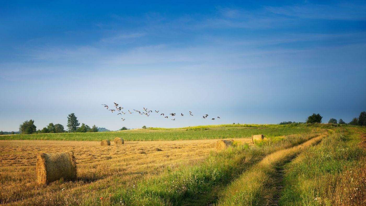 Így lehet klímabarátabb a mezőgazdaság