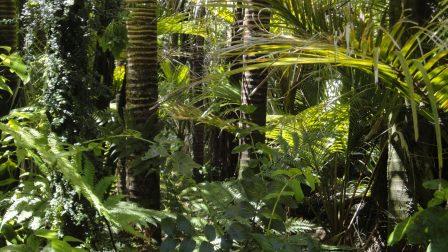 Megmenthető még az Amazonas?