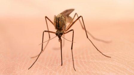szúnyoggyérítés b11
