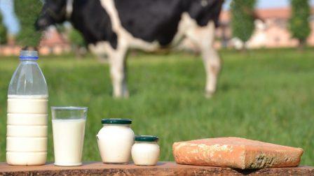 tejtermékek(1)