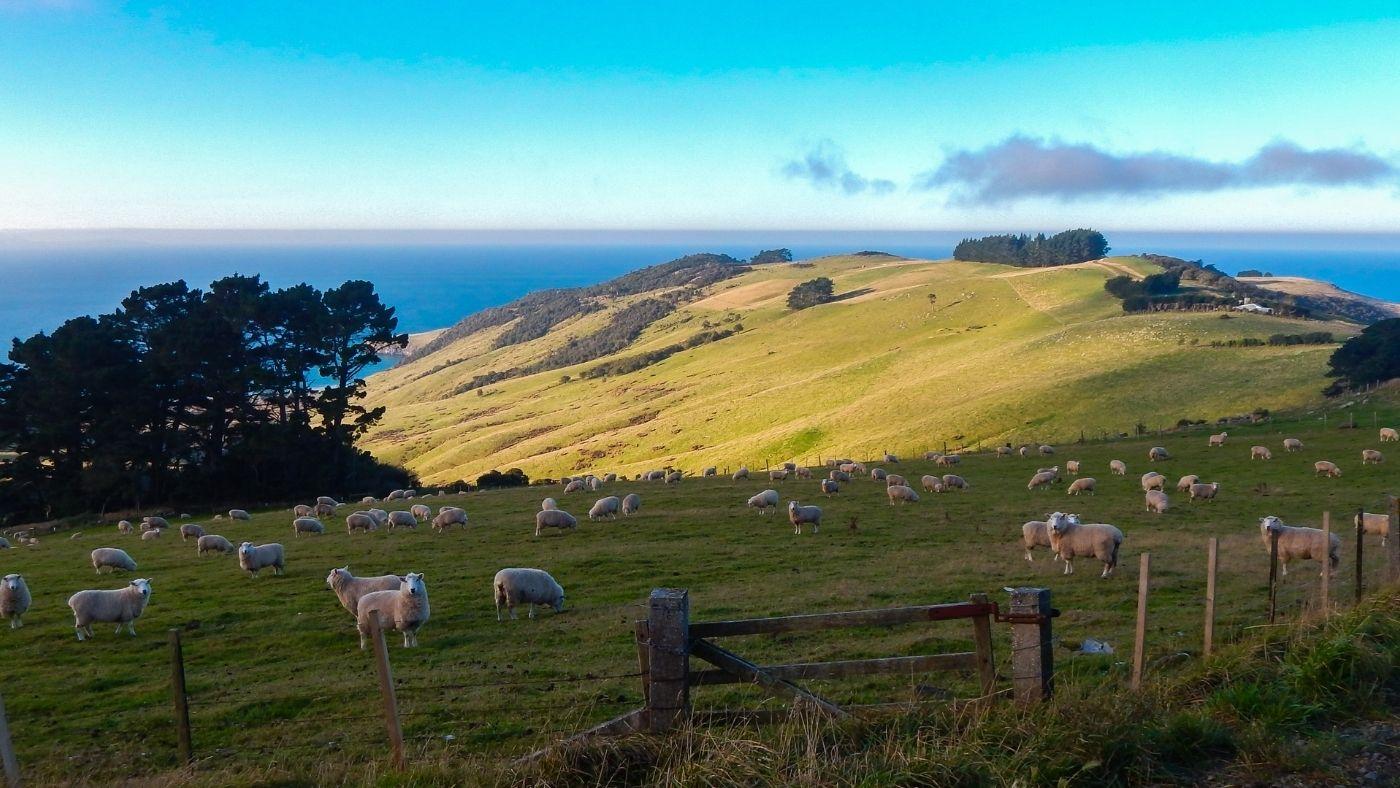 Új-Zélandon vészelhetjük át legnagyobb eséllyel a civilizáció összeomlását