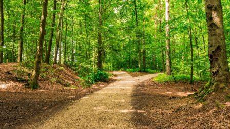 zöld út(1)
