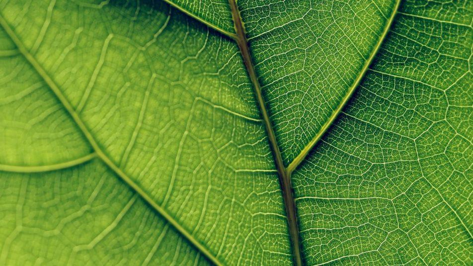 1400×788-green-olivia-hutcherson