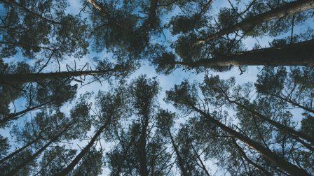 1400×788-pexels-lombkorona