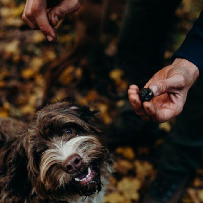 Erdőkerülő szarvasgomba kutya