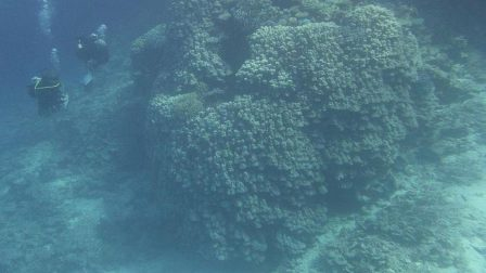 Nem mindennapi felfedezés történt a Vörös-tengerben