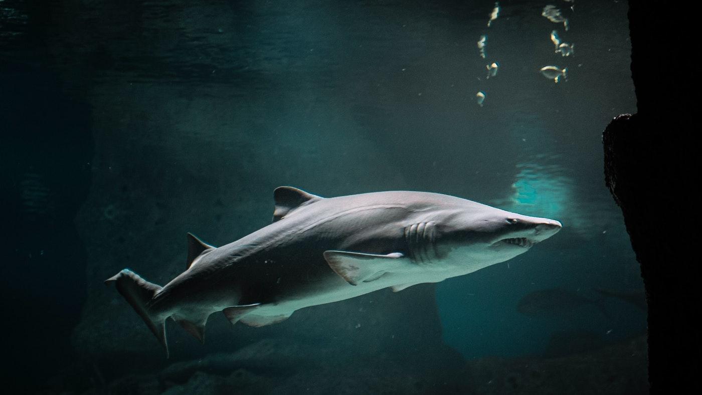 A tonhalak gyarapodnak, a cápák fogynak
