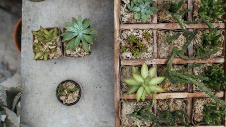 1400×788-pexels-kaktuszok