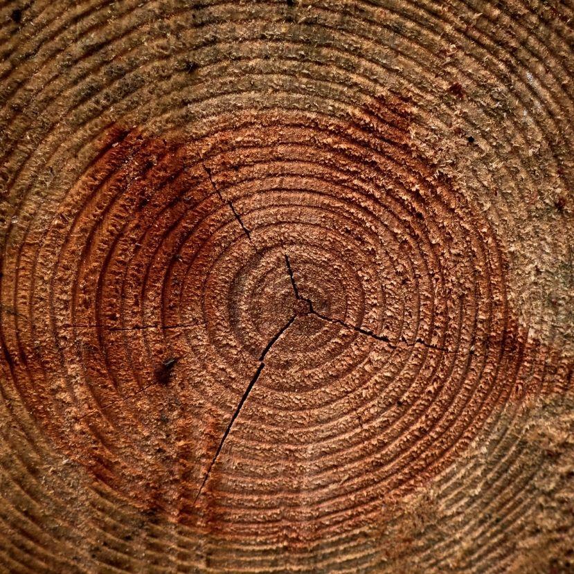 Miről mesélnek a fák évgyűrűi?