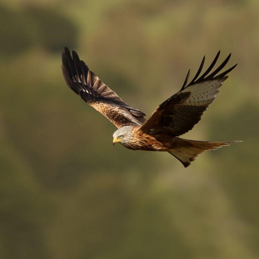 Folytatódik a turai madárpusztulás