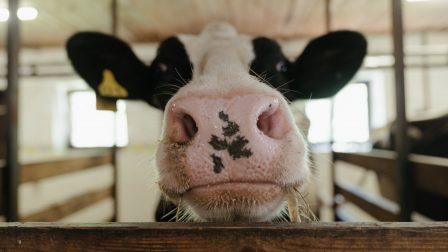 Az élelmiszertermelésből származó összes üvegházhatású gáz közel 60%-át a hús okozza