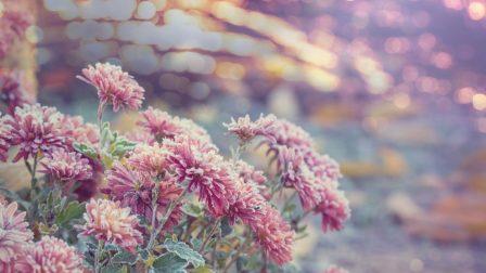 fagyott virágok(1)