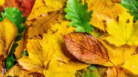 A felmelegedés eltüntetheti az ősz megszokott színeit