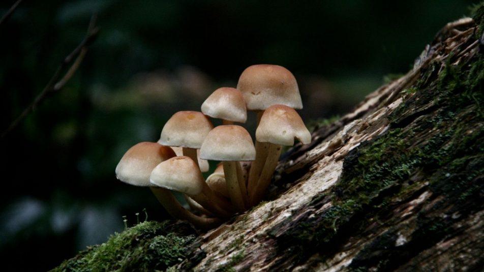 gombák b1