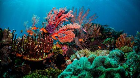 Mi is az a korall, és mi lesz a sorsu(n)k?