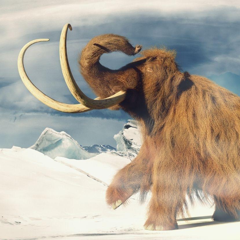 Életre keltenék a mamutokat, hogy segítsenek lassítani a klímaváltozást