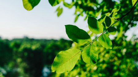 zöld ág(1)