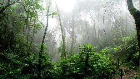 Fellélegezhet az amazonasi esőerdő Brazíliában