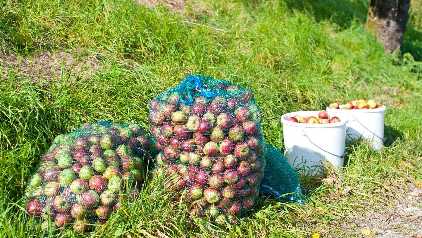 Ausztriában törvény fogja védeni a termelőket a nagykereskedők túlhatalmától