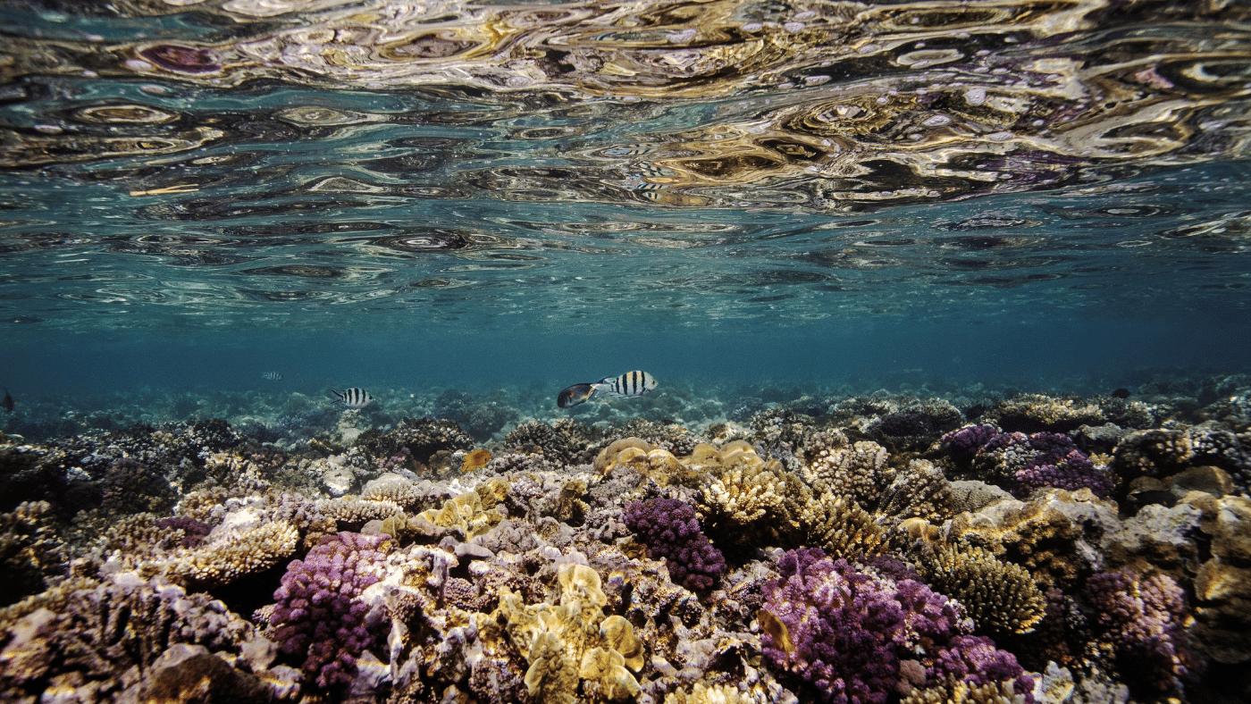 A klímaváltozás a világ korallzátonyainak 14%-át elpusztította, de felcsillant a remény