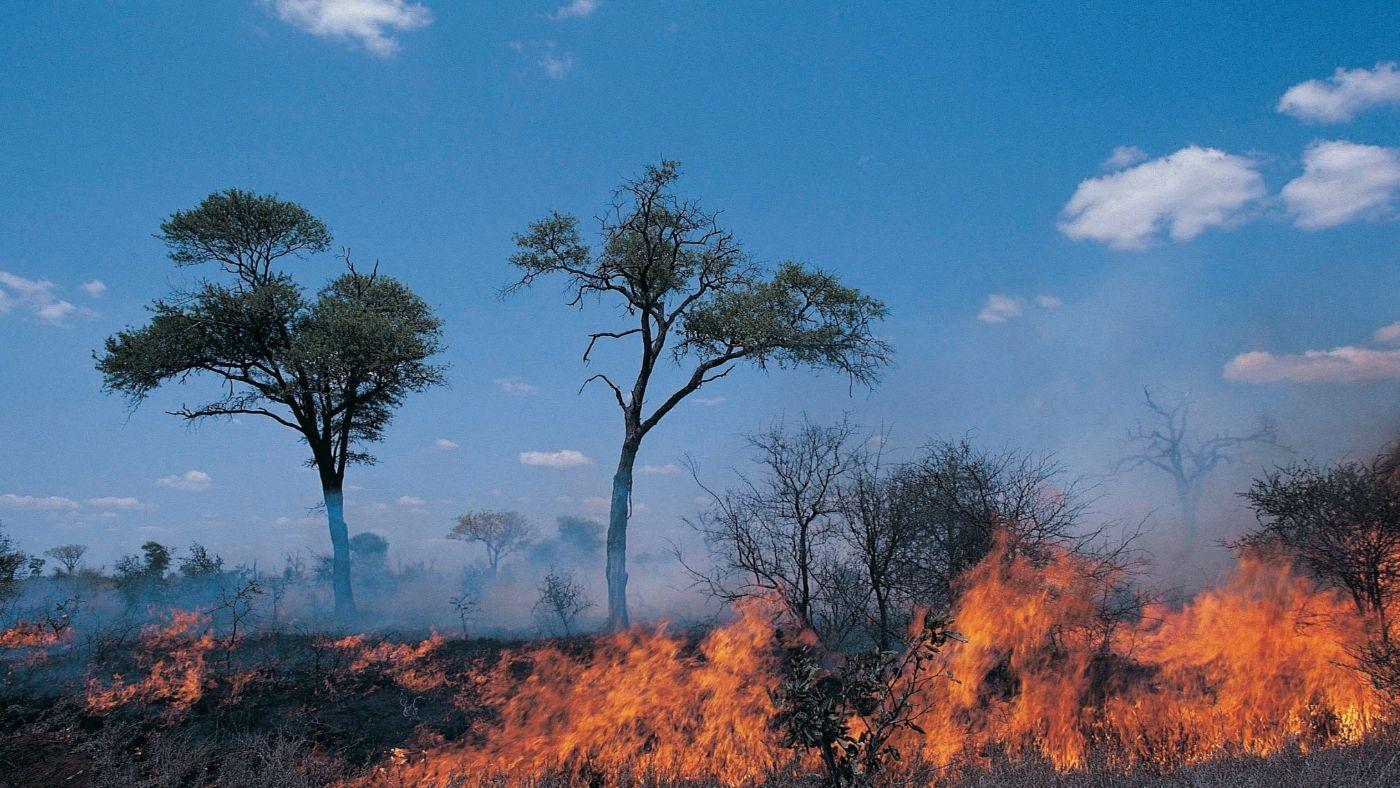 Lehet, hogy nem csak a felmelegedés áll a szaporodó erdőtüzek mögött?