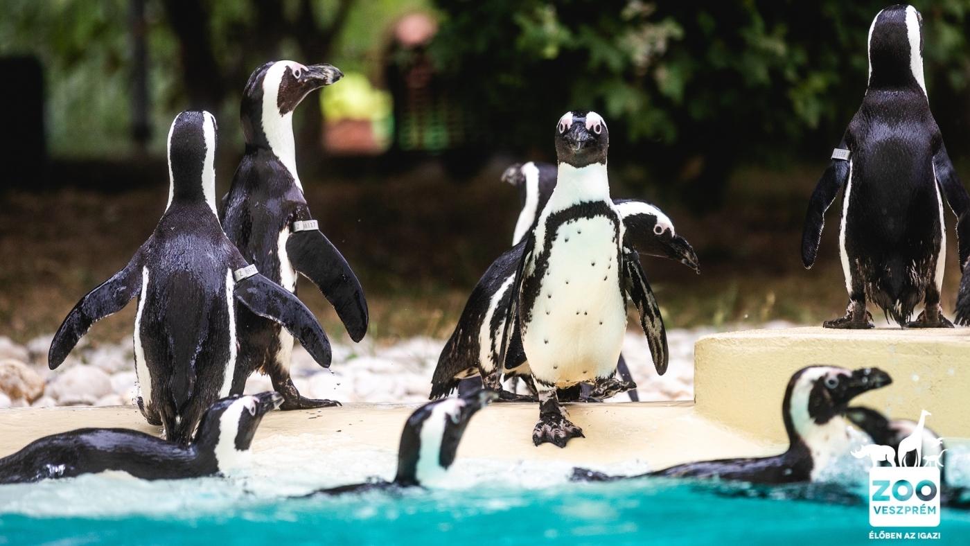 A veszprémi állatkert is a hulladékmentes jövő mellett