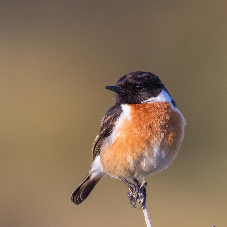 Elkészült Magyarország első átfogó madáratlasza