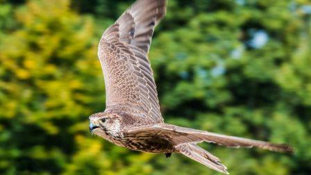 Az európai madárfajok ötöde veszélyeztetett