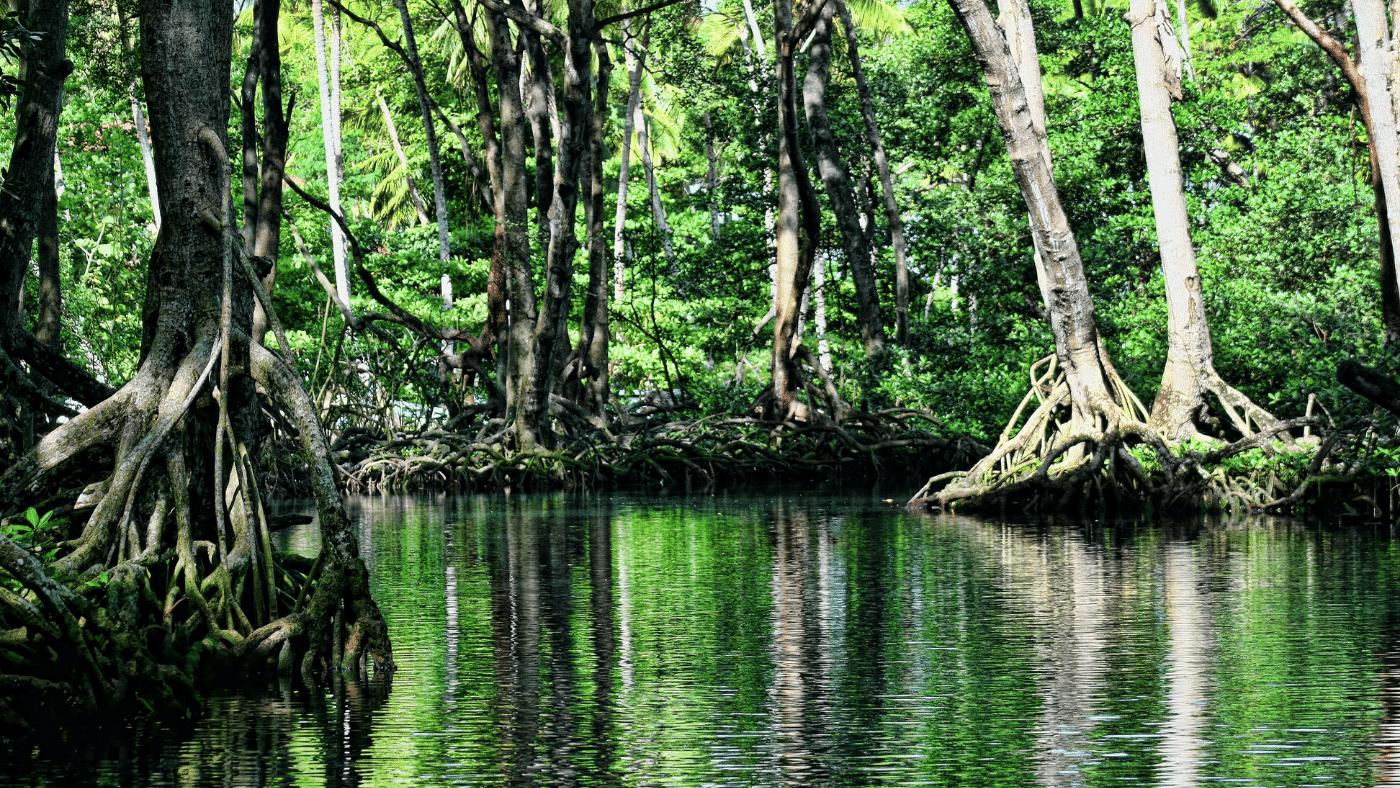 Titokzatos mangroveerdő tanít a múltbeli és jövőbeli tengerszint-emelkedésről