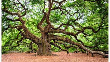 öreg tölgyfa